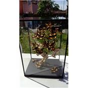 Vitrine papillons divers